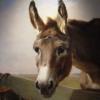 Portrait d'âne 65×55 cm